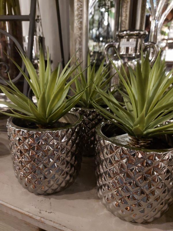 Cactus en Vaso Silver