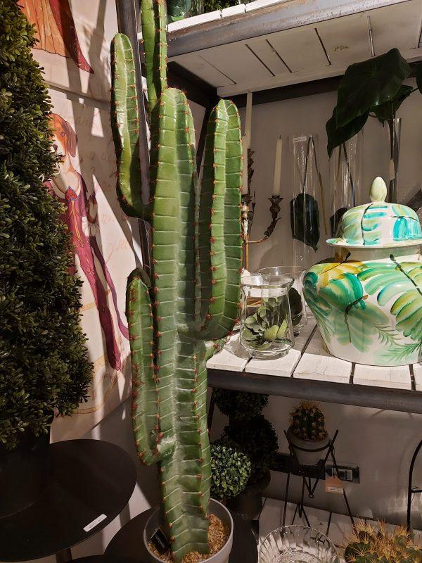 Planta de Cactus Bajo