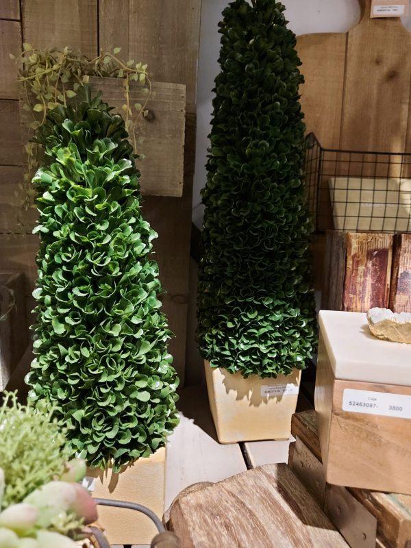 Topiary Boxus Cono Alto