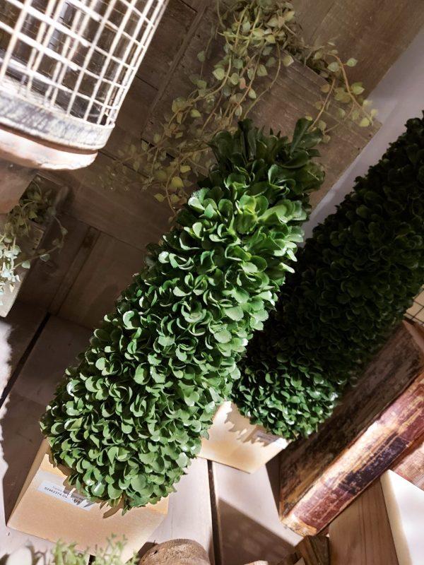 Topiary Boxus Cono Bajo